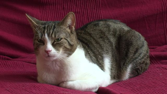 how to remove cat urine from sofa cushion