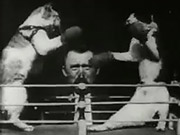 The boxing cats prof weltons  library of congress